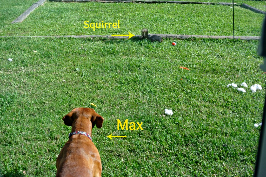max vs squirrel