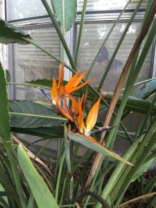 bird of paradise my life such as it is wordless wednesday
