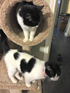 cats shelter rescue my life such as it is family pets