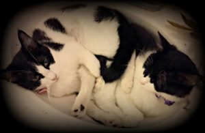 my life such as it is, cats, family pets, adoption, shelter rescue