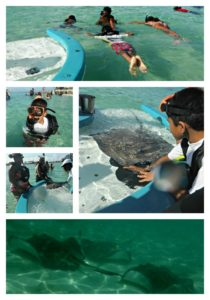 my life such as it is disney cruise feeding stingrays castaway cay