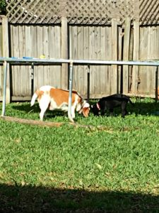 my life such as it is, rescue dogs, backyard, ruby, lulu