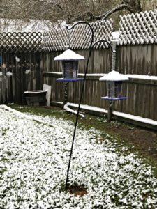 backyard snow, houston, texas, my life such as it is