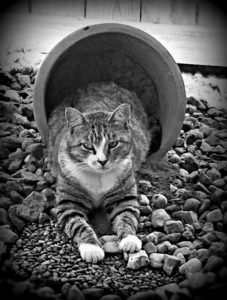 my life such as it is.com, cat, rescue, family pet, outdoors, TomCat